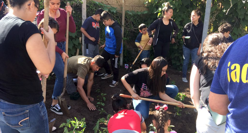 Villa Cesar Chavez Salsa Garden Service Learning Project with CSUCI Students